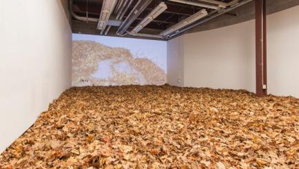 'Leaf Room'